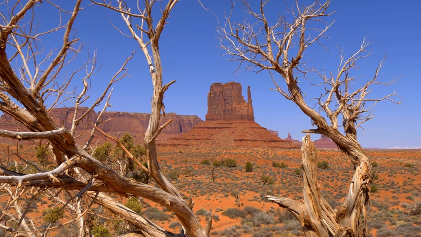 mittens : Dry trees at Monument Valley in Utah
