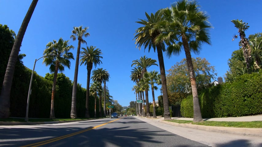 автобус : Drive through the Palm tree Alleys of Beverly Hills - LOS ANGELES. USA - MARCH 18, 2019
