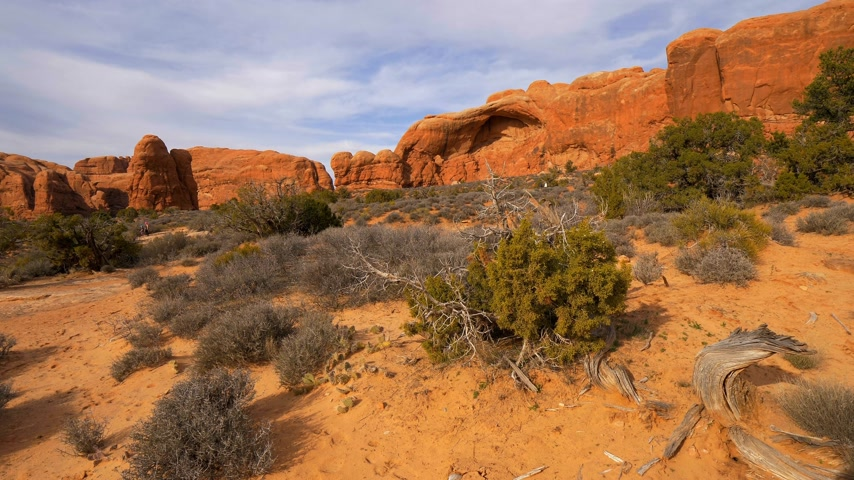 moab : Dry vegetation at Arches National Park in the desert of Utah Stock Footage