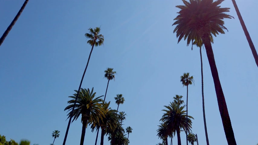 эксклюзивный : The Palm trees of Beverly Hills - travel photography