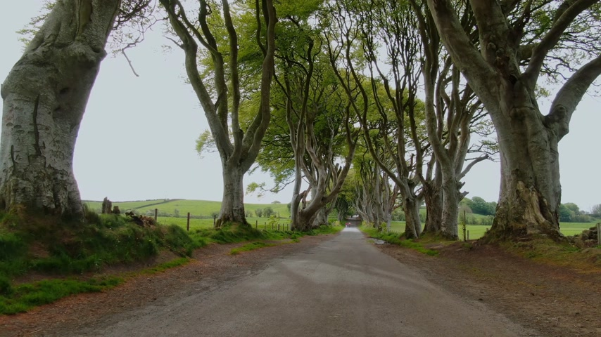 frightful : Dark Hedges of Stranocum in North Ireland