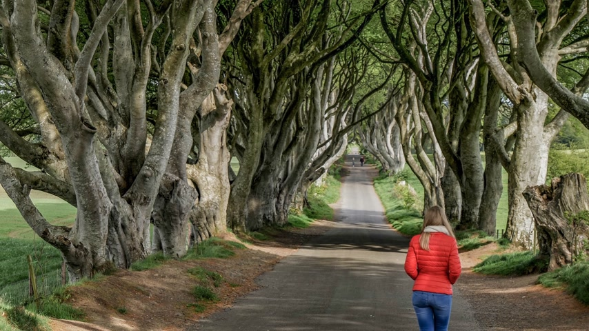 frightful : The Dark Hedges - a famous location in Northern Ireland Stock Footage