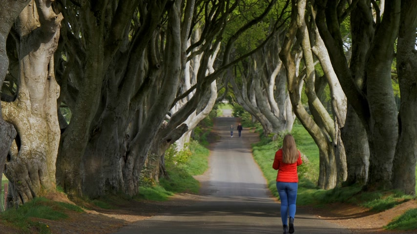 converge : The Dark Hedges of Stranocum in Northern Ireland