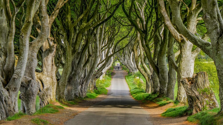 converge : The Dark Hedges - a famous location in Northern Ireland Stock Footage