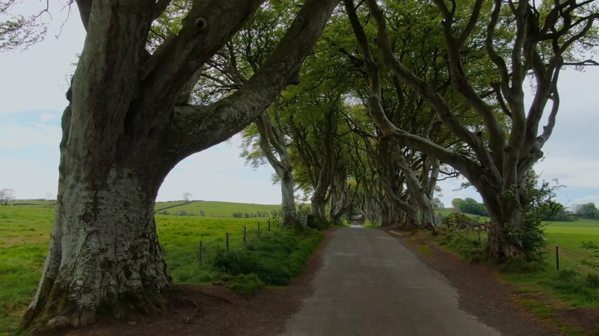 royaume magique : Dark Hedges of Stranocum in North Ireland