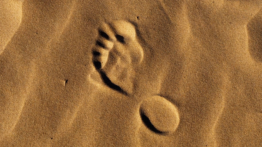 прядь : Footsteps in the sand on a beach