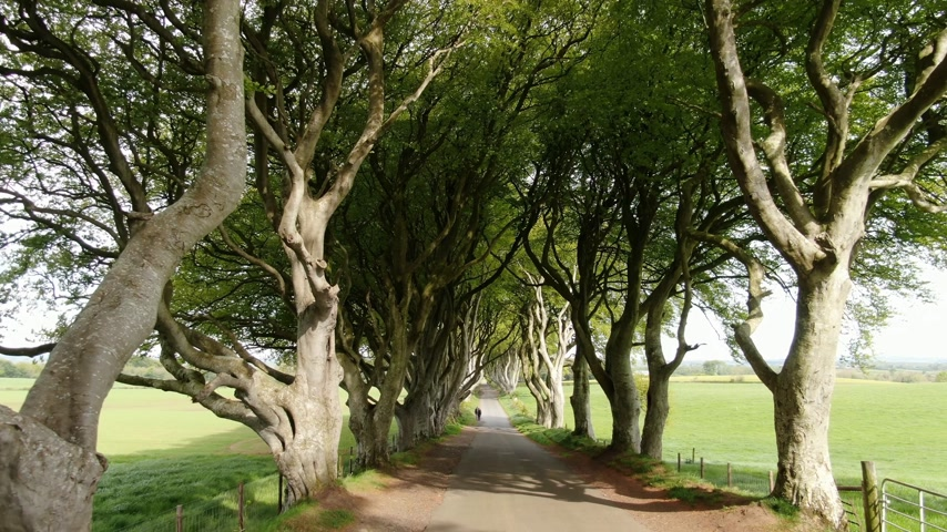 heg : Dark Hedges of Stranocum in Noord-Ierland