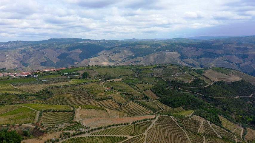 виноградник : The vineyards of Douro Valley in Portugal - the land of famous port wine