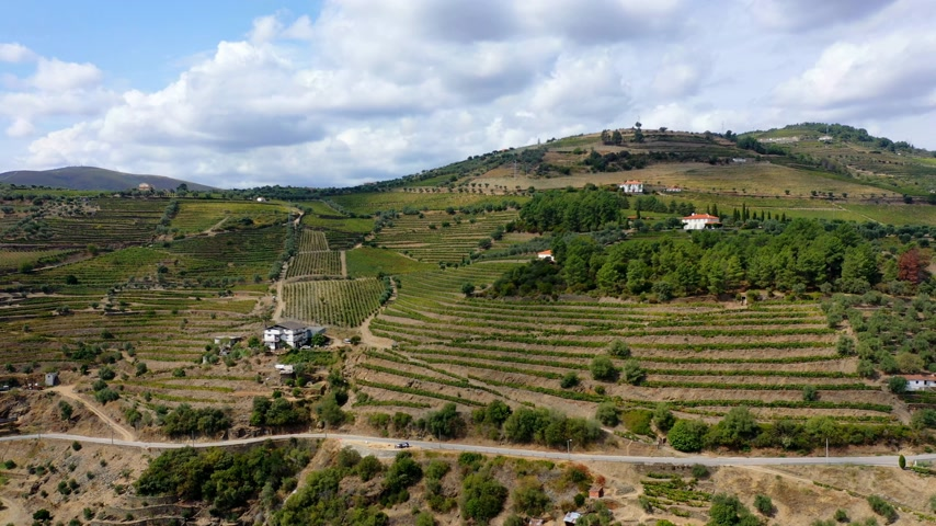 лоза : The vineyards of Douro Valley in Portugal - the land of famous port wine