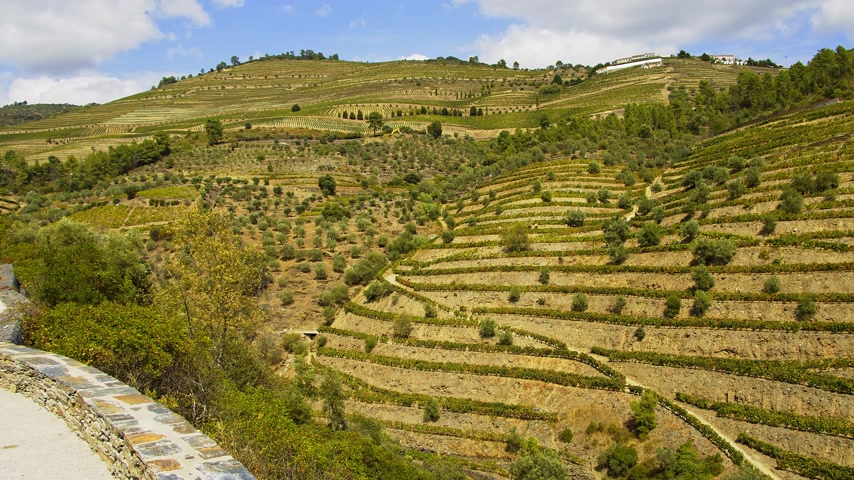 şarap : The amazing landscape of Douro Valley in Portugal with its famous vineyards