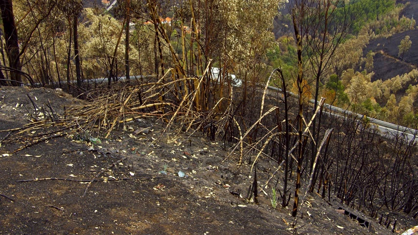 valley of fire : Burnt vegetation after a wildfire in the hills of Portugal
