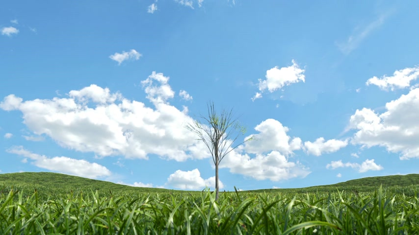 rostoucí : Single tree growing on a grass field