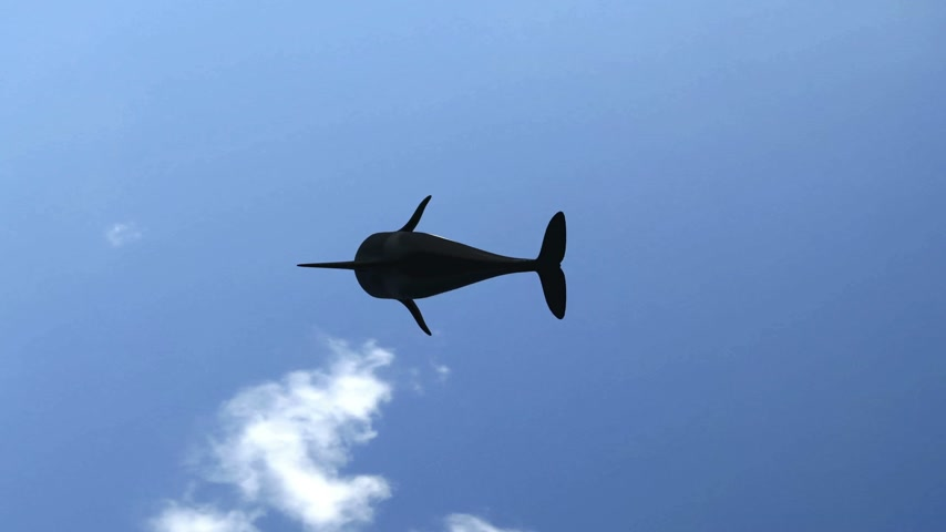 wieloryb : Killer Whale Jumping (with matte)