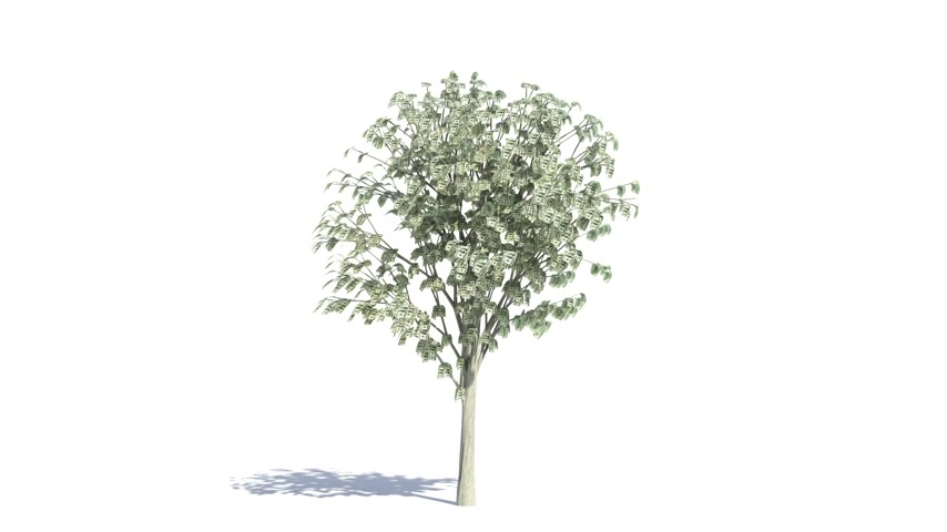 rostoucí : Money Tree growing with color matte Dostupné videozáznamy