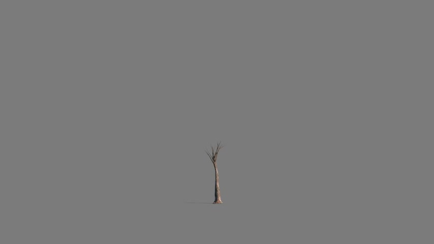 dal : Growing tree timelapse with alpha matte for tree and shadow.