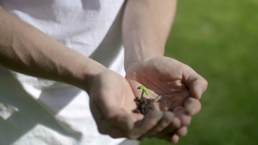 Plant Growing on Hands Wideo