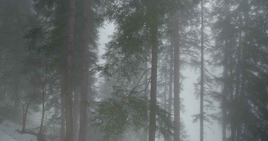 Foggy Forest in the Snow