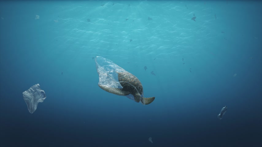 biodegradable : Dead Turtle on plastic bag