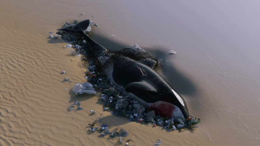 killer whale : Killer Whale Dead by Ocean Pollution Stock Footage