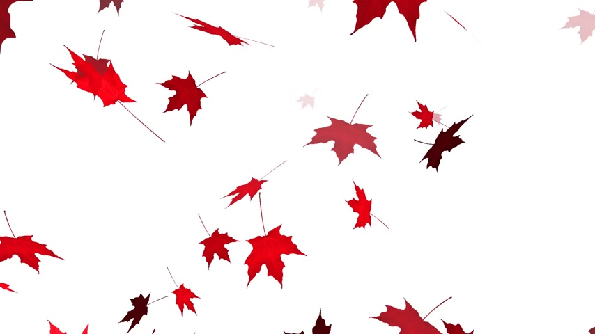 herfst : HD Loopable Vallende Maple Animatie