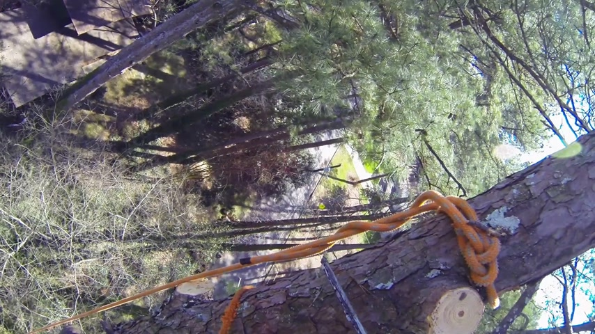 serwis : Tree topping Wideo