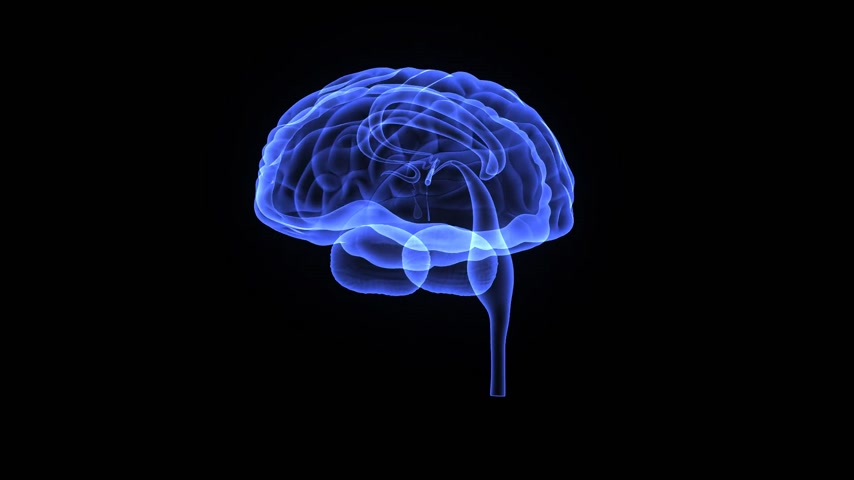 neurologia : Cerebro Archivo de Video