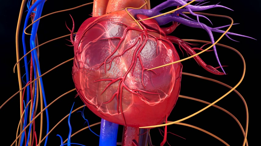 circulatory : Blood circulation in heart Stock Footage