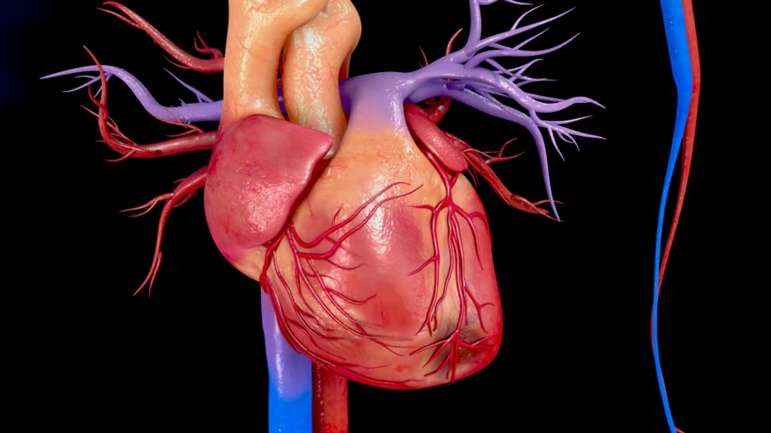 graft : Coronary artery bypass grafting(CABG)