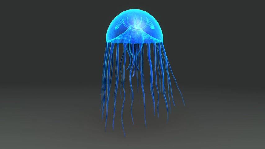 galaretka : 3d motion of Jellyfish