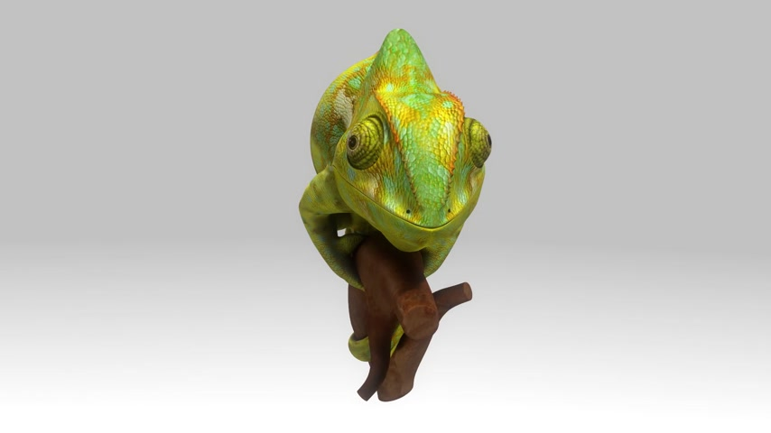 chamaeleo : 3d motion of Chameleon Stock Footage