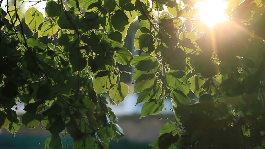 napfény : Sunlight, Green Leaves, and Wind.