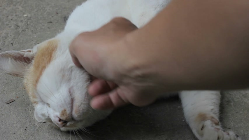бдительный : hand stroking the cat under its neck