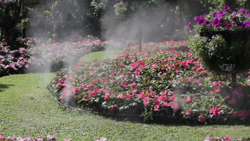 ogród : flower garden with water spray in sunshine
