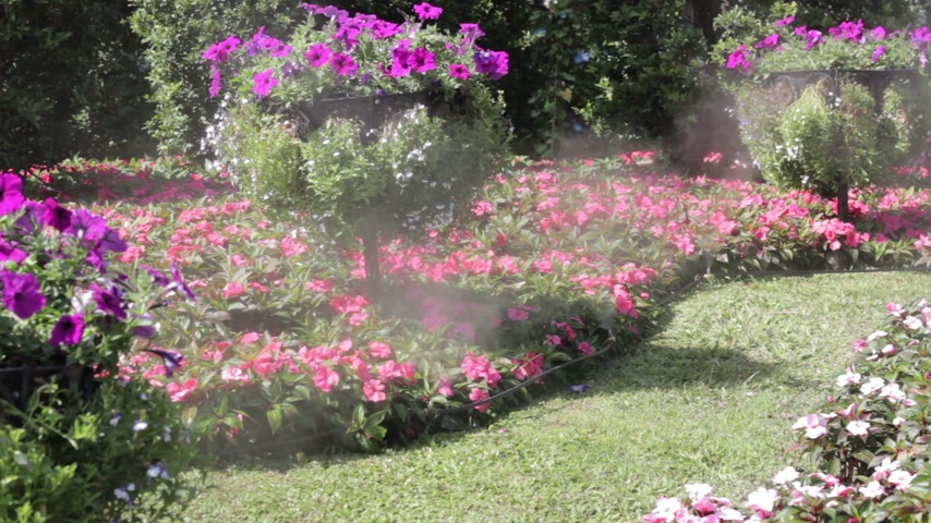 güneş ışını : flower garden with water spray in sunshine