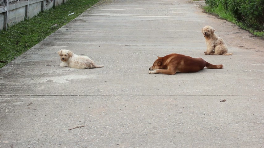 cur : three dogs laying down on the street.