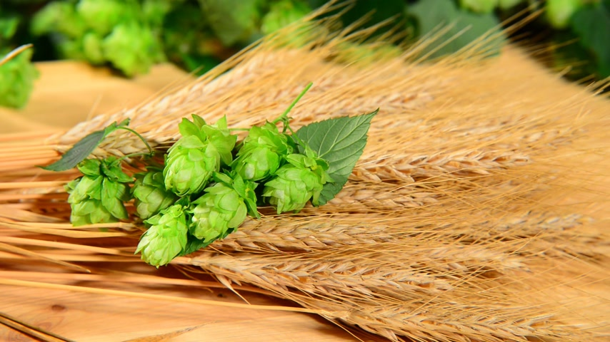 hops : hops and barley malt in the basket,zoom in