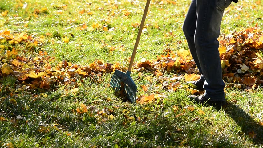 limpar : Worker rakes leaves out in the autumn. No camera movement. Real time.
