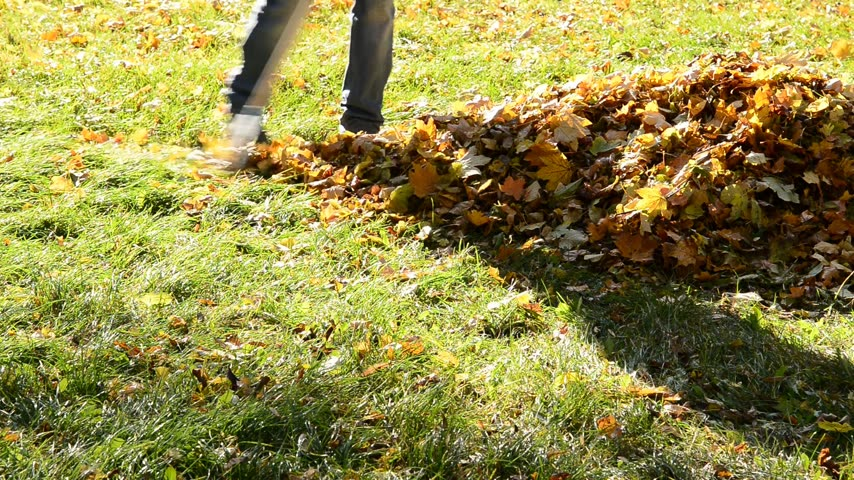 limpar : Worker rakes leaves out in the autumn.