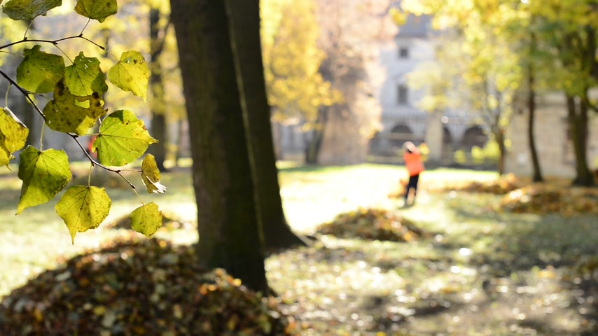 limpar : Workers rake leaves out in the autumn park. No camera movement. Real time. Stock Footage