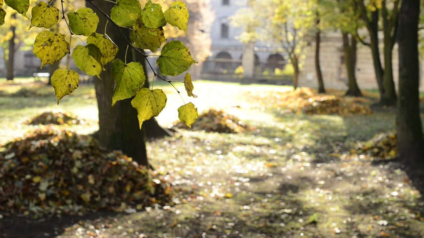 limpar : Autumn Park With Heaps Of Leaves. No camera movement. Real time. Stock Footage