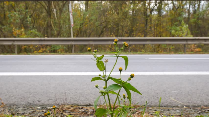 ограждение : Detail of a Plant at the Road with Heavy Traffic. With Sound. Shot with Dolly.