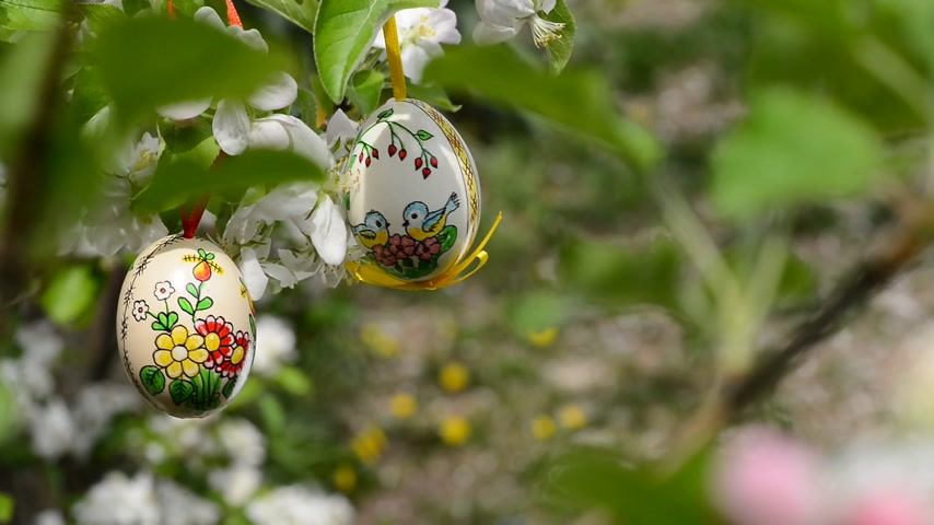 Easter egg hanging on the apple tree in the garden. Rack focus. Stok Video