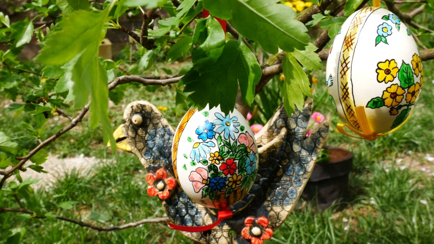Easter eggs hanging on the twig in the garden. Panning.