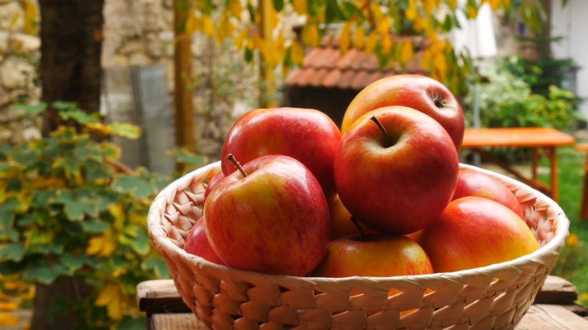 vime : Red Apples in the Basket in the Garden. Panning.