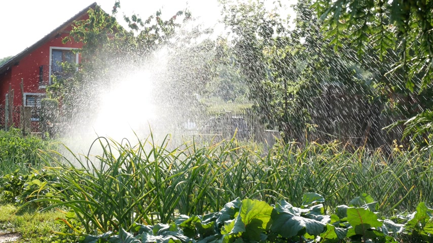 Watering of the family garden in the sunny day.