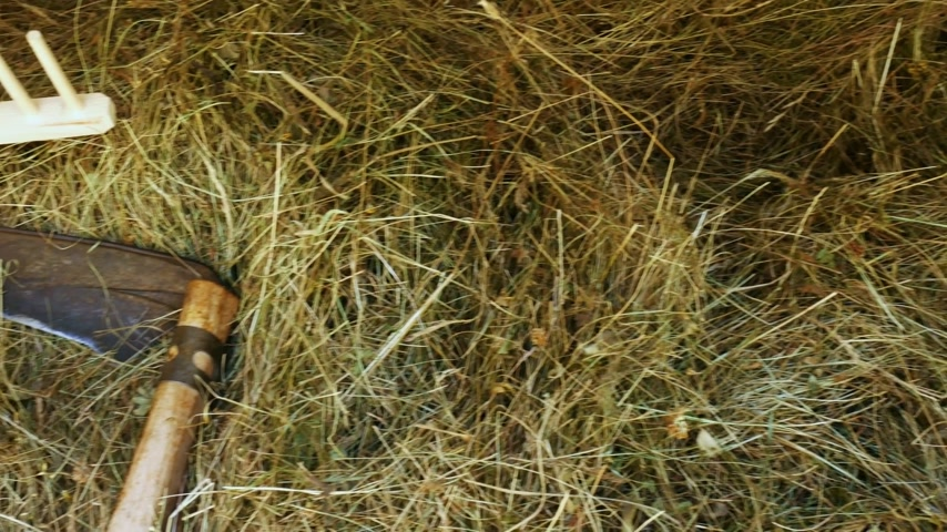 A scythe and a rake with hay. Mr. Stok Video
