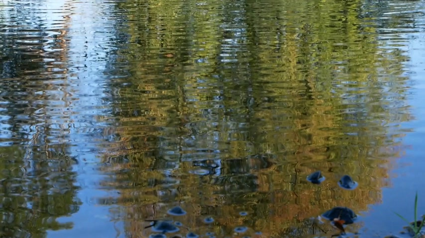 senhor : Background. Reflection of tree on the water surface. Zoom in. Mr. Vídeos