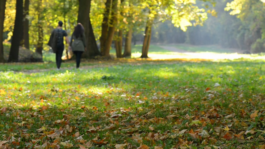 profundidade de campo rasa : Pair of young people walking in the autumn park. Mr.