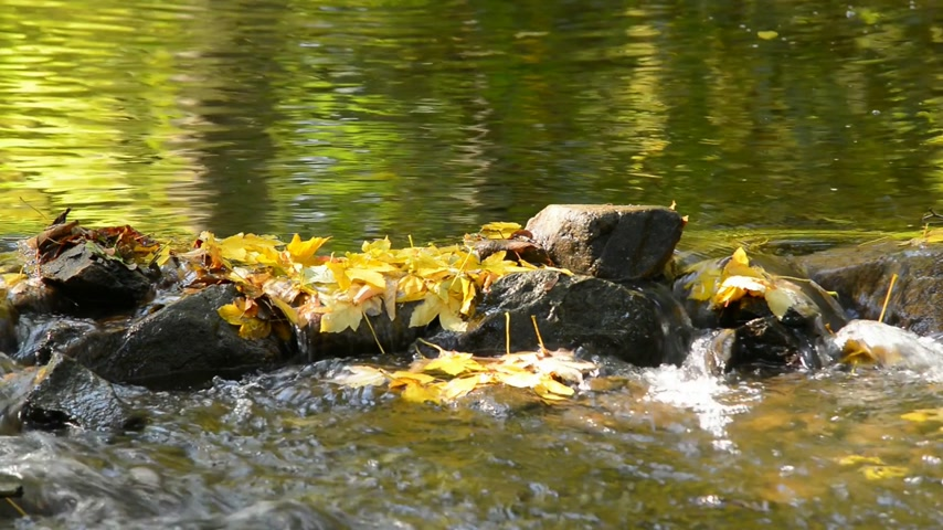 senhor : Detail of stones in the creek in autumn. Zoom in.