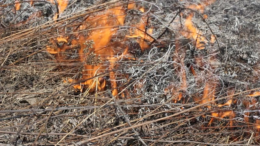 slash and burn : Fire of grass